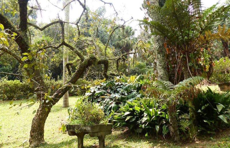 jardim-botanico-de-sao-paulo5