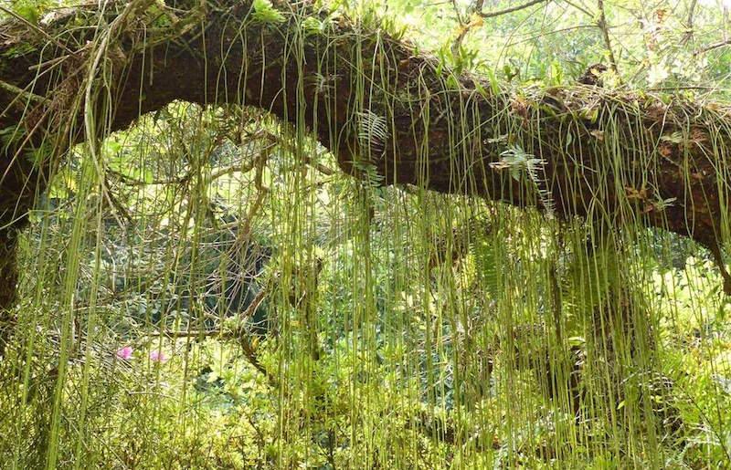 jardim-botanico-de-sao-paulo7
