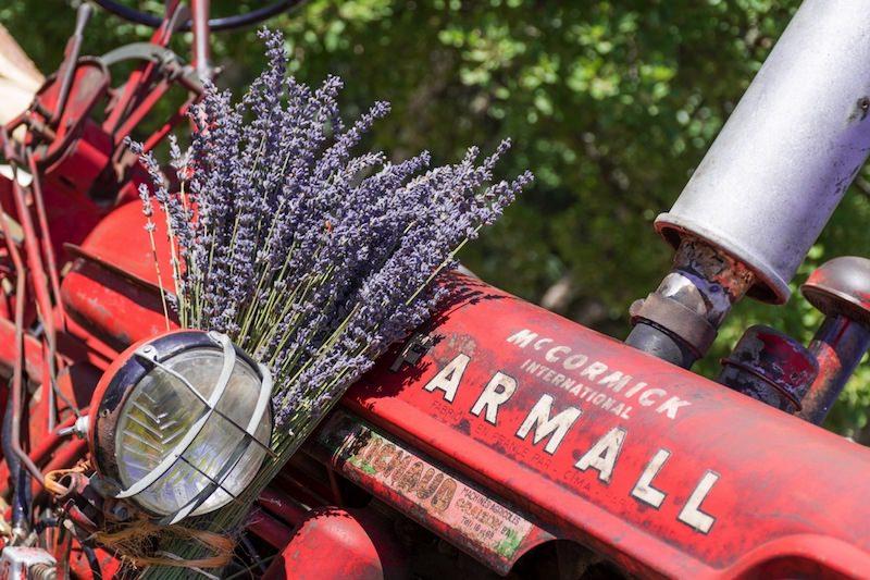 tracteur-decore-lavande-fete-de-la-lavande-sault-copy